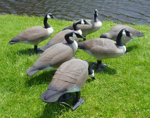 Donna's Lawn Ornaments-Geese Decoys on Backyard Decor Canada id=61119